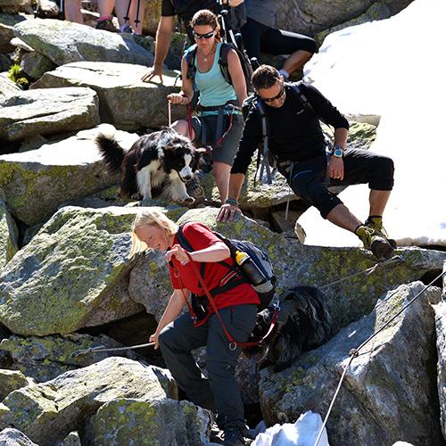 Bergwandelen met je hond