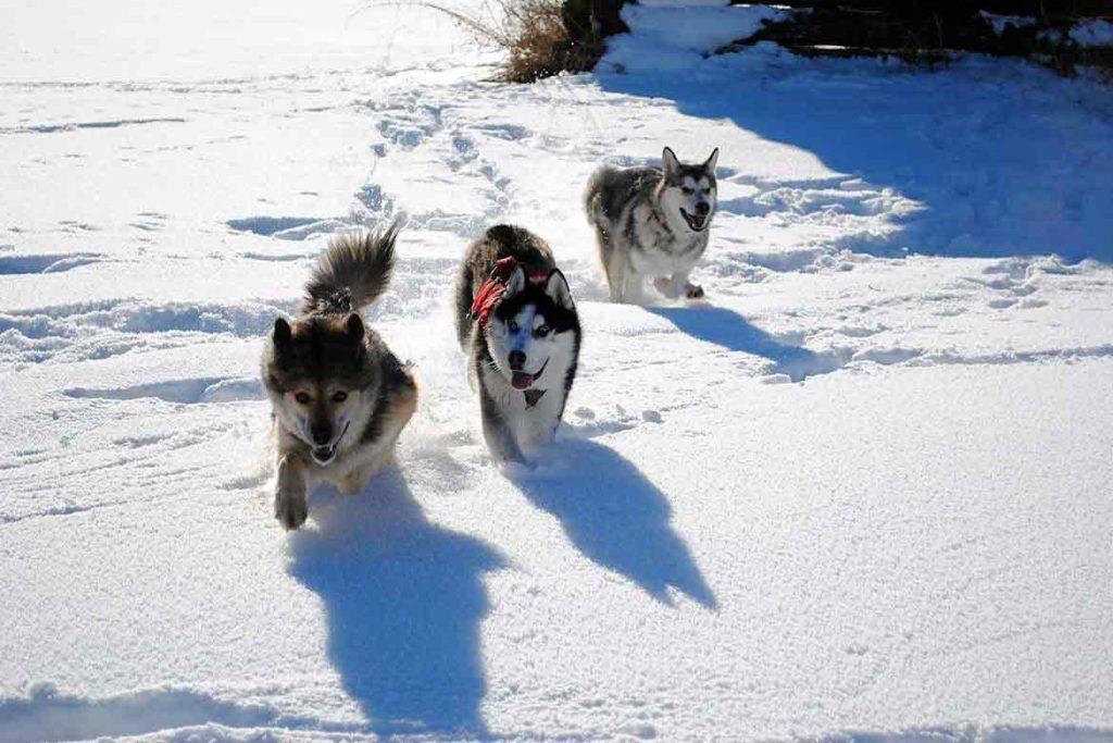 Dog Trails