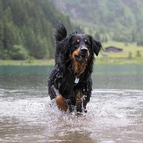 DogWalkTrail The Good Life