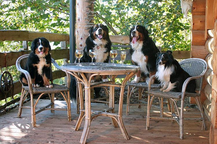 Dogloghomes - The Cabin