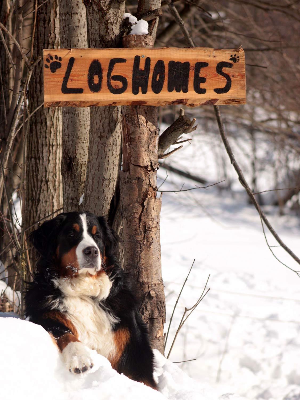 DogLogHomes