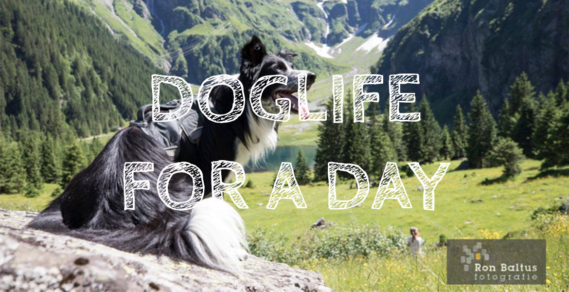 DogLife for a day